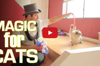 Cats Reacting To Magic > Dogs Reacting To Magic