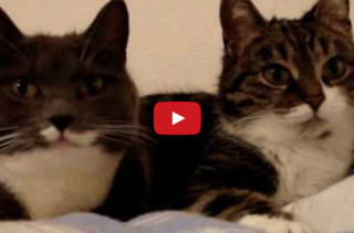 Cats Carry On A Conversation With Each Other