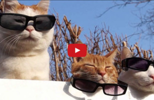 Cats Wearing Shades Is The Only Video That Matters