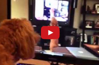 Dog Barking At A Video Of Herself Barking At A Video Of Herself...