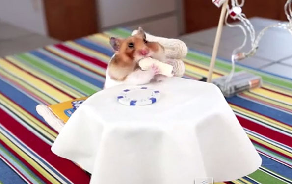 hamster-eating-tiny-burrito-1