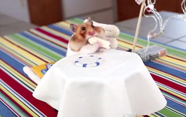 hamster-eating-tiny-burrito-1