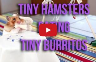 TINY HAMSTERS EATING TINY BURRITOS!!