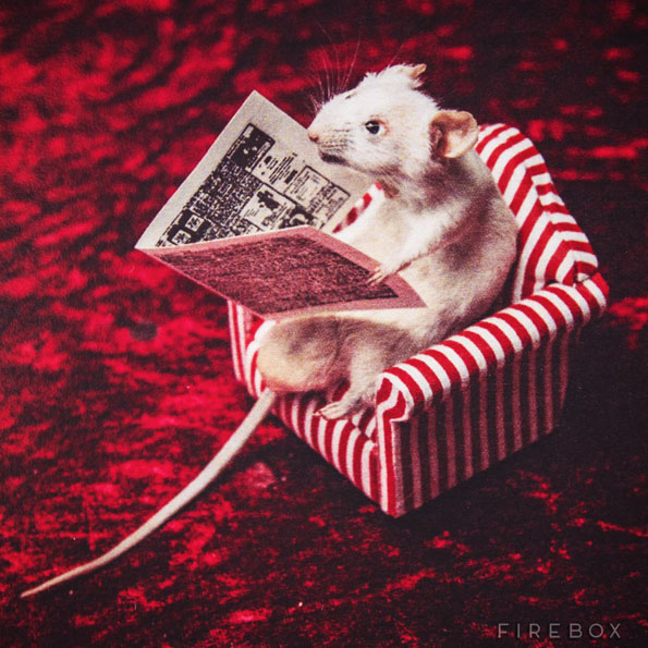mouse-taxidermy-kit-3
