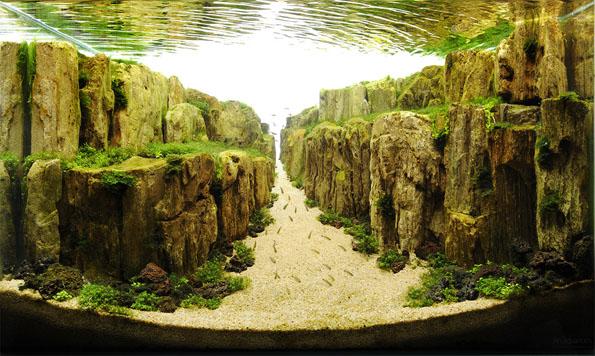 underwater-landscaping-aquarium-aquascaping-10