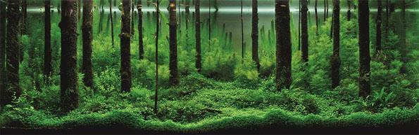underwater-landscaping-aquarium-aquascaping-2