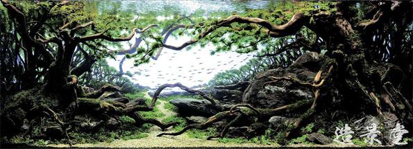 underwater-landscaping-aquarium-aquascaping-3