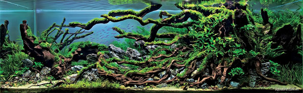 underwater-landscaping-aquarium-aquascaping-4