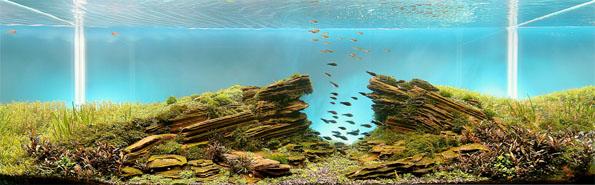 underwater-landscaping-aquarium-aquascaping-5