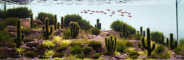 underwater-landscaping-aquarium-aquascaping-6