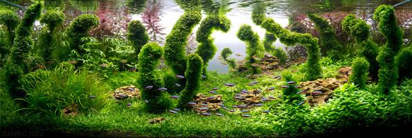 underwater-landscaping-aquarium-aquascaping-7