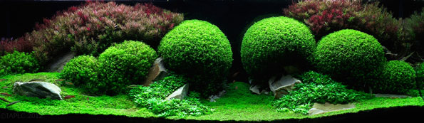 Amazing intricate aquarium landscapes incredible things Aquarium landscape