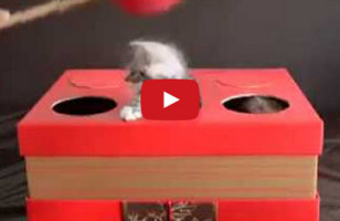 Kitten Whac-A-Mole Isn't As Morbid As It Sounds