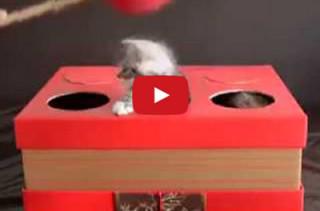 Kitten Whac-A-Mole Isn't As Morbid As It Sounds