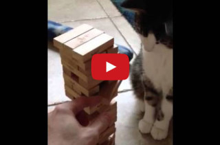 Jenga: Fun For The Whole Family, Including Kitty!