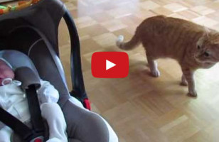 Cat Meeting New Baby Will Tug Your Heartstrings