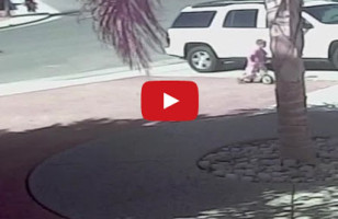 Good Kitty: Cat Rescues Boy From A Dog Attack