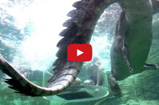 Terrifyingly Cool: Crocodiles Jumping In Slo-Mo