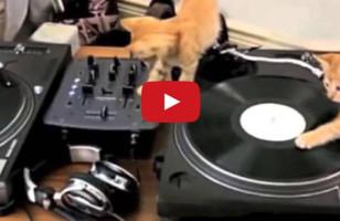 Kittens Aren't Good DJs But They're Cutest DJs