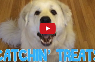 This Dog Is The Worst At Catching Treats!!
