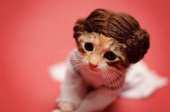 Kittens As Pop Culture Characters Is Painfully Cute