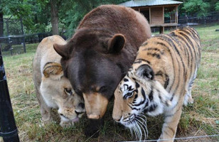 Oh My!: Lion, Tiger, & Bear Are Real Life Besties