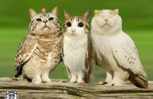 Meowls: Cat Heads, Owl Bodies