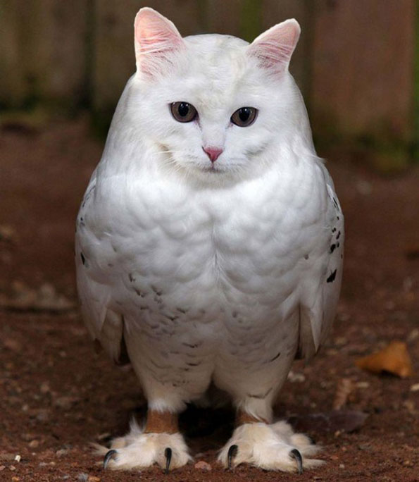 meowls-cat-head-owl-body-8