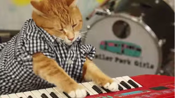 new-keyboard-cat-1