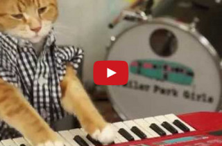 Keyboard Cat Is Back & Better Than Ever!