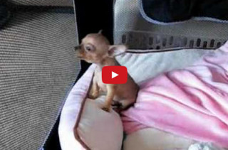 Watch This Puppy Howl & Squee Your Face Off