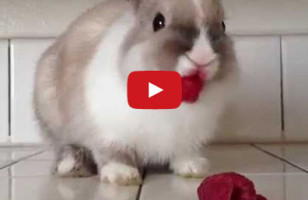 Bunny Eats Raspberries, Wears Lipstick, Looks Good