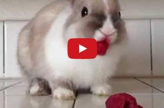 Bunny Eats Raspberries, Wears Lipstick, Looks Good