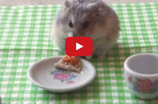 TINY HAMSTER EATING TINY PIZZA!!
