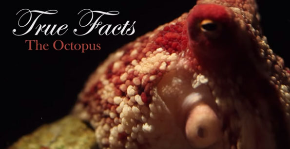 true-facts-about-the-octopus