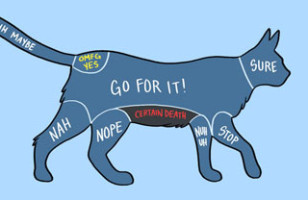 LOL: A Diagram Depicts Where To Pet Animals