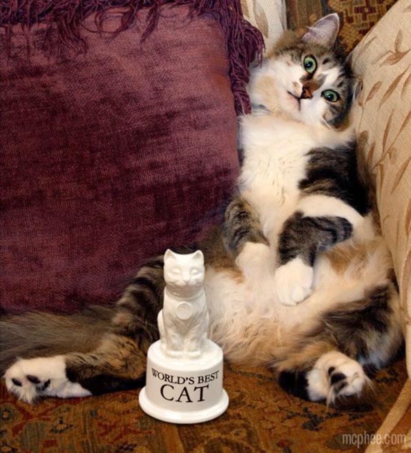 worlds-best-cat-trophy-2