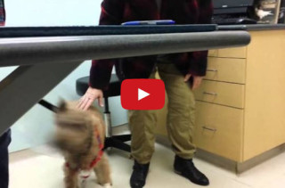 Watch This Blind Dog See His Fam Post-Eye Surgery & Smile Your Face Off