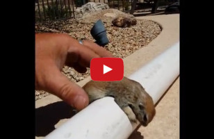 Man Miraculously Saves Squirrel By Performing CPR