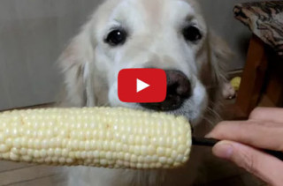 Too Cute! This Dog LOVES Eating Fruits & Veggies