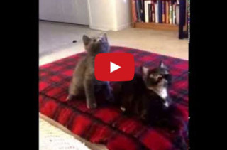 Kittens Dancing In Sync With 'Turn Down For What' = Insanity
