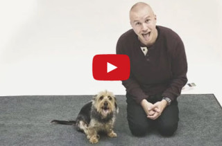 Dogs React Hilariously To Crazy Human Barking At Them