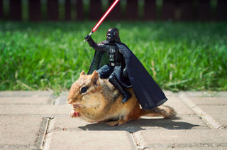 Chipmunks Join The Star Wars Cast & More Incredible Links