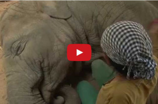 Watch This Woman Woman Sing An Elephant To Sleep