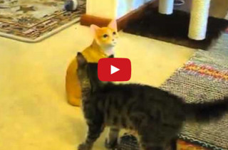 A Real Cat Meets A Cat Statue, Hilarity Ensues