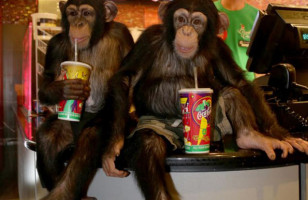 Chimps Go To See 'The Dawn of the Planet of the Apes' In Theaters