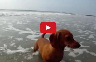 Interspecies Mingling: Dog, Meet Crab. Crab, Meet Dog.