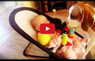 Dog Steals Baby's Toy, Feels The Guilt, Tries To Make It Up