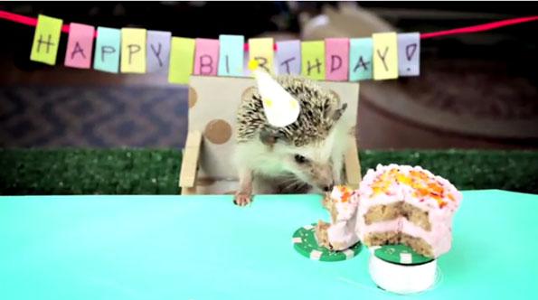 hedgehog-hamster-cake-day-3