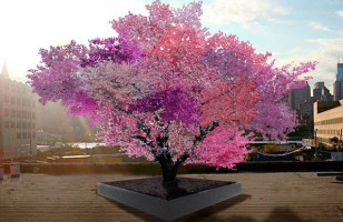 This Hybridized Tree Produces Over 40 Different Fruits
